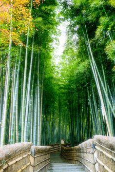 Bamboo path, Adashi-no-Nenbutsu Temple in Kyoto, Japan
