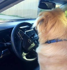 Is your #Toyota perfect for your four-legged, furry #friend?