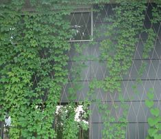 Carl Stahl Benelux (Product) Carl Stahl Stainless steel systems for green facad… - Pinboard Tutorial and Ideas Vertical Garden Wall, Vertical Farming, Wire Trellis, Garden Trellis, Carl Stahl, Landscape Design, Garden Design, Climber Plants, Green Facade