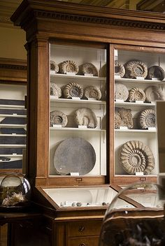 Part of the Fossil Room in Teylers Museum, Netherlands.