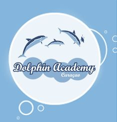 Dolphin Academy at Willemstad Curacao in the Dutch Caribbean
