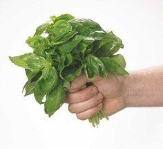 Chá de alfavaca - Conheça as propriedades desta erva