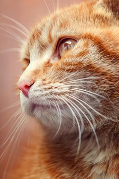 Beautiful. Ginger boy cats are the sweetest. Credit photo to?