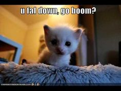 Funny Cats Compilation 2016 - Best Funny Cat Videos Ever Cute Animals With Funny Captions, Animal Captions, Animal Memes, Cute Baby Animals, Animals Kissing, Funny Pictures For Kids, Funny Animal Pictures, Funny Kids, Funny Photos