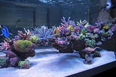Aquarium Filters And Aquarium Supplies Saltwater Aquarium Setup, Aquarium Sump, Coral Reef Aquarium, Aquarium Terrarium, Saltwater Fish Tanks, Marine Aquarium, Aquarium Fish Tank, Aquarium Ideas, Fish Aquariums