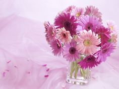 Lilac daisy arrangement. I would use pink.
