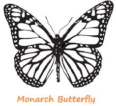 Printable monarch butterfly coloring sheet