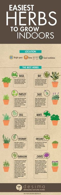 Want to grow an Indoor Herb Garden ? Learn everything you need to know in these 7 INFOGRAPHICS that'll teach you everything about growing herbs indoors. Growing an indoor herb garden is the best .