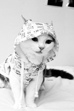 cat in the hood...