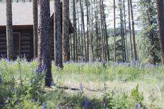 Devil's Thumb Ranch   allyson in wonderland