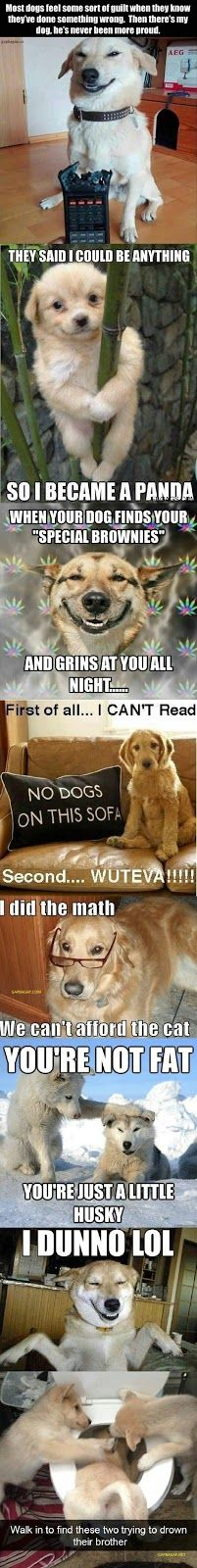 Top 5 Funniest Memes Of The Day ft. Funny Dogs