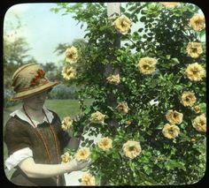 Glass lantern slide: Woman with yellow roses, 1913. Harrisburg, Pa. via @Smithsonian Gardens   #garden