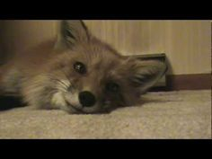 ▶ Kevie sings a pretty song - YouTube