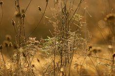 photo: minja myrberg