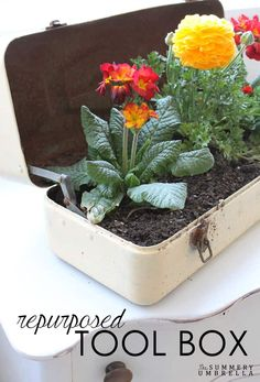 flower planter using an old repurposed toolbox...