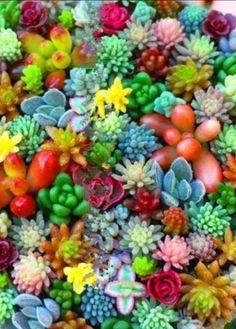 ¿Quieres identificar todas las suculentas de uso ornamental?   Si eres amante de las suculentas, si te encanta decorar tus espacios co... Echeveria, Flora Botanica, Cactus, Encendido, Succulents, Garden, Palm Trees, Succulent Plants, Mistress