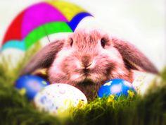 Buona Pasqua: ecco le immagini da condividere con amici, colleghi e parenti su WhatsApp e sui social network per fare gli auguri