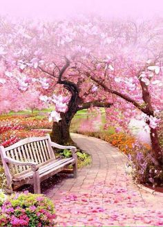 Diamond Painting Pink Blossom Trees – Miracles from Nature Beautiful World, Beautiful Gardens, Beautiful Flowers, Beautiful Places, Beautiful Pictures, Beautiful Nature Wallpaper, Beautiful Landscapes, Pink Blossom Tree, Cherry Blossom Tree