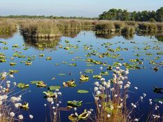 Save Burns Bog. Fight MK Delta's Industrial plans in Burns Bog. Petition
