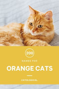 Ditch Garfield and find the perfect name for your ginger maned feline friend. #CatNames #CatIdeas #CatTips #CatLovers #CatNameList Unique Cat Names, Cute Cat Names, Funny Names, Girl Cat Names, Aslan Narnia, Japanese Cat, Kitten Care, Orange Cats, Ginger Cats