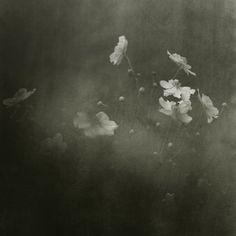 Les anémones. Béatrice Lechtanski