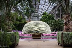 Longwood Gardens, PA - Crysanthamum on a single stem Outdoor Art, Outdoor Spaces, Outdoor Decor, Longwood Gardens, Education Architecture, Animal Tattoos, Amazing Gardens, Botanical Gardens, Garden Landscaping