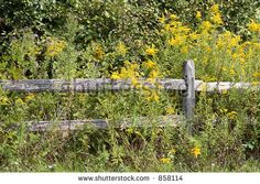rustic wooden picket fences.   I like this very much.