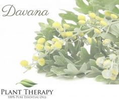 March 2016 Oil of the Month--Exotic Davana!