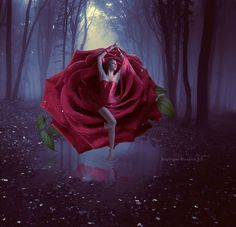 Coedwig(Forest) Harddwch(Beauty) from within the shadowlands..she arose from still waters..a tiny seed that blossomed into a crimson flower......the  symbolic goddess of love and passion...The Rose.....