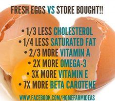 Fresh Eggs Vs. Store Bought Eggs