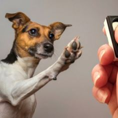 Get Started With Clicker Training For Dog - http://www.dog-ramblers.co.uk/dog-clicker-training/
