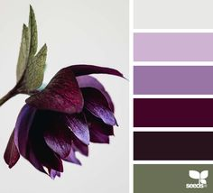 Flora Tones - https://www.design-seeds.com/in-nature/flora/flora-tones-24
