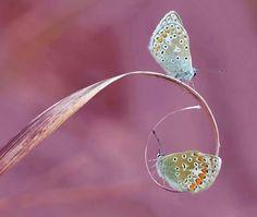 Kelebeklerr