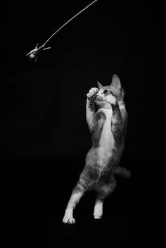 """""""There is nothing more playful than a young cat."""" --Thomas Fuller"""