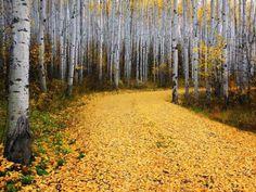 Herbst  #Universal #Waldquiz