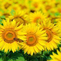 How To Create An Orange & Yellow Flower Garden at Ideal Home Garden