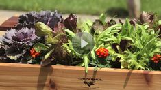 Save your back with a planter box that elevates vegetables and flowers./
