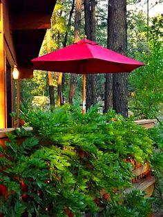 red umbrella, how to fix a faded umbrella, painted outdoor umbrella, wood deck, wisteria