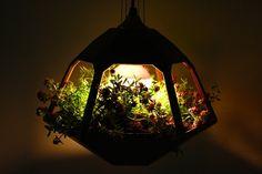 Vicky Pendant Lamp Terrarium Shines a Light on Indoor Gardenin...
