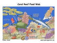 Ocean Food Web Activity - Yahoo Image Search Results