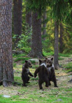 The three little bears.