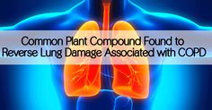 Common Plant Compound Found to Reverse Lung Damage Associated with COPD        |         EndoRiot