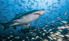 Shark review: if Jaws gave you nightmares, wait until you meet the tasselled wobbegong …