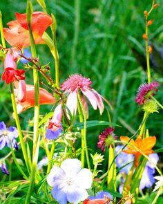 Contrasten - Denkers in TuinenDenkers in Tuinen | Ontwerpers van stijlvolle en tijdloze tuinen