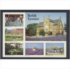 Norfolk Lavender Ltd Caley Mill Heacham Multiview #Postcard on #eBid United Kingdom