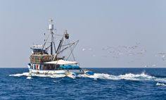 Ive gone deep sea fishing of the Gulf Coast atleast I did about 5 mins of fishing the rest I spend sick in the cabin lol