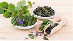 Popenec se jako léčivá byli i koření používá čerstvý a sušený Korn, Parsley, Pesto, Succulents, Herbs, Plants, Gardening, Home Remedies, Lawn And Garden