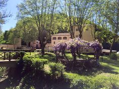Il parco termale delle Terme di Stigliano. #gazebo #green #glicine #flowers