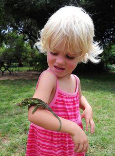 Jackson't Chameleon