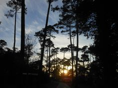 #pine #pineforest #sunset #nature #surfcamp #france #moliets #goodvibes #summer #beachbreak #lookingforward #planetsurf #planetsufcamps #trees #sky #twilight #atmosphere #surfing #bluesky
